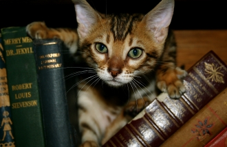 Matata the reading Bengal cat by Justin Atkins on Flickr